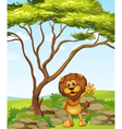 A lion standing beside a big tree vector image vector image