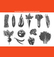 engraved style organic vegetables collection vector image