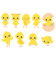 set cartoon chicks a collection cute yellow vector image vector image