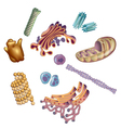 Organelles found in cells vector image