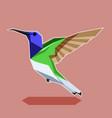 flat polygonal hummingbird vector image