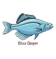 grouper color vector image vector image