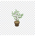 isolated houseplant isometric fern element vector image vector image