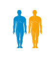 Male human anatomy standing front vector image vector image
