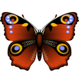 summer butterfly vector image vector image