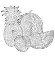 hand drawn pineapple watermelon apple vector image