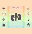 human organs kidney icon vector image vector image