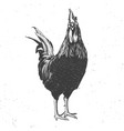 rooster black and white vector image