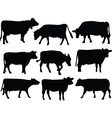 cow collection vector image