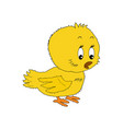 cute baby chick shows a side isolated on a white vector image