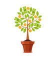 financial plant green tree in pot vector image
