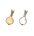 natural organic onion in colorful and outline vector image vector image