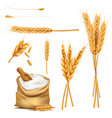 wheat ears grains and flour in sack set vector image