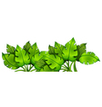Green leafy plant vector image vector image