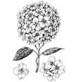 Hydrangea flower set Hand drawn detailed hortensia vector image vector image