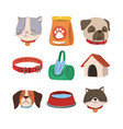 pets cat dog collar water house food and bags vector image vector image