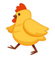 plump chicken with short claws and sharp beak vector image