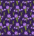 spring beautiful violet crocuses pattern vector image vector image