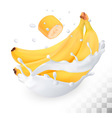 Yellow banana in a milk splash on a transparent vector image vector image