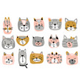 collection of colorful cat faces funny vector image vector image