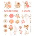 elegant dry flowers protea pale roses