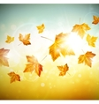 Autumn background with leaves vector image