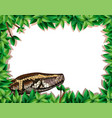 a snake in nature frame vector image vector image