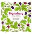 Boysenberry branches elements set on white