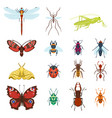 colorful top view insects icons isolated on white vector image vector image