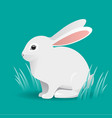 cute white bunny rabbit cartoon vector image vector image