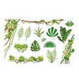 jungle vine cartoon rainforest leaves and liana vector image