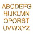 orange font vector image