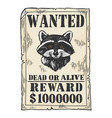 poster with raccoon color engraving vector image vector image