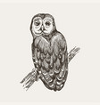 hand drawn ink pen owl vector image vector image