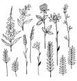 hand drawn wild herbs and flowers sketch vector image vector image