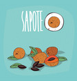 set of isolated plant sapote fruits herb vector image vector image