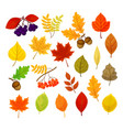 big set with different autumn berries vector image vector image