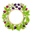 boysenberry branches frame on white vector image