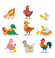 chicken set farm chick hen and rooster in vector image vector image