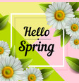 hello spring hand lettering with daisy flower vector image
