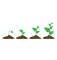 phases plant growing planting tree infographic in vector image vector image