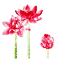 background with red watercolor lotus vector image vector image