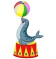 Cartoon Circus seal playing a ball vector image vector image