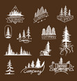 forest badge tree collection vector image vector image