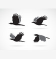 group black crow flying on white background vector image vector image