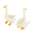 Isometric 3d of farm goose vector image