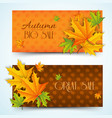 natural autumn sale horizontal banners vector image vector image