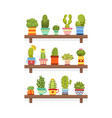 cute cactus and succulent plants on wooden shelves vector image