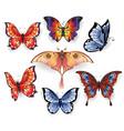 set bright exotic butterflies vector image