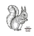 Forest animal squirrel hand drawn black ink